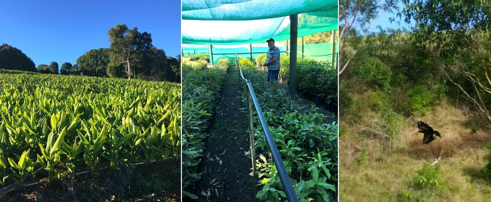 Noan Olivenöl Blog Macadamia Farm Australien