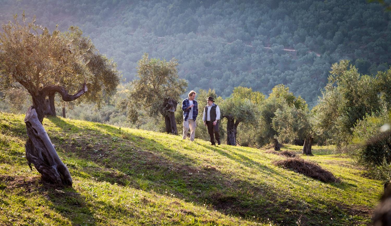 Olivenhain Griechenland